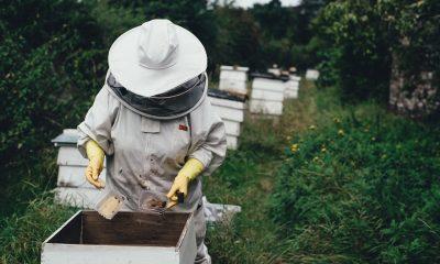 sfaturi pentru ingrijirea albinelor